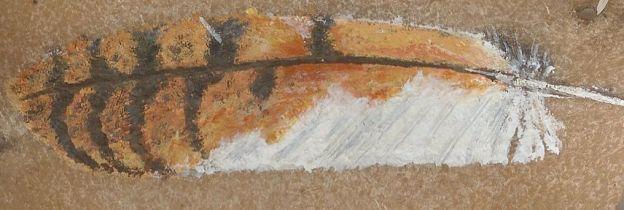 sova pálená pírko